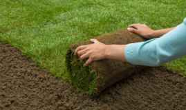Lawn Turf Or Grass Seed – Which Is Better For Your Lawn?