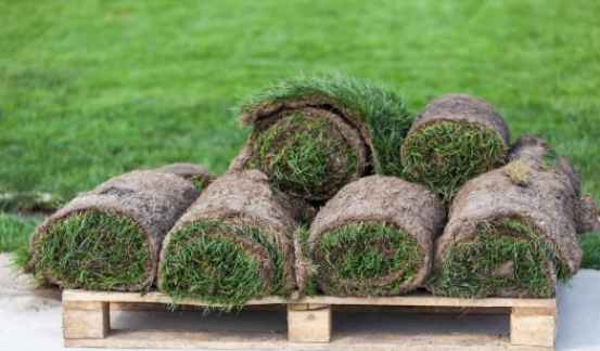 Why Should You Choose Turf Grass?