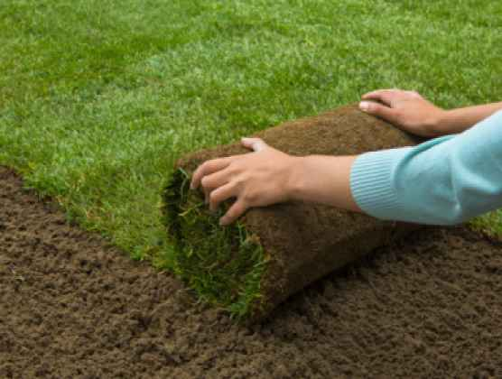 Product Lawn Turf