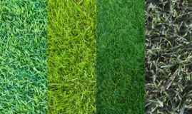 Using Different Types Of Turf For Lawns