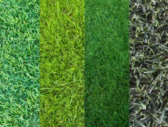 Product Lawn Sand