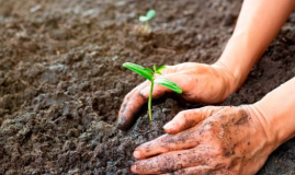 Few Ways To Improve The Condition Of Garden Soil