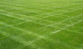 Everything You Wanted To Know About Lawn Sand