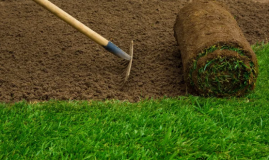Top Benefits Of Turf Grass That You Didn't Know