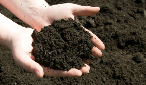 Effective Ways To Improve Quality Of Topsoil
