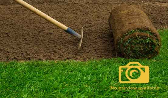 5 Things We Should Remember When Buying Artificial Grass